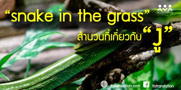 snake in the grass สำนวนที่เกี่ยวกับงูที่น่าสนใจ